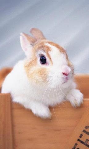 【可爱的小白兔下载】可爱的小白兔官方下载